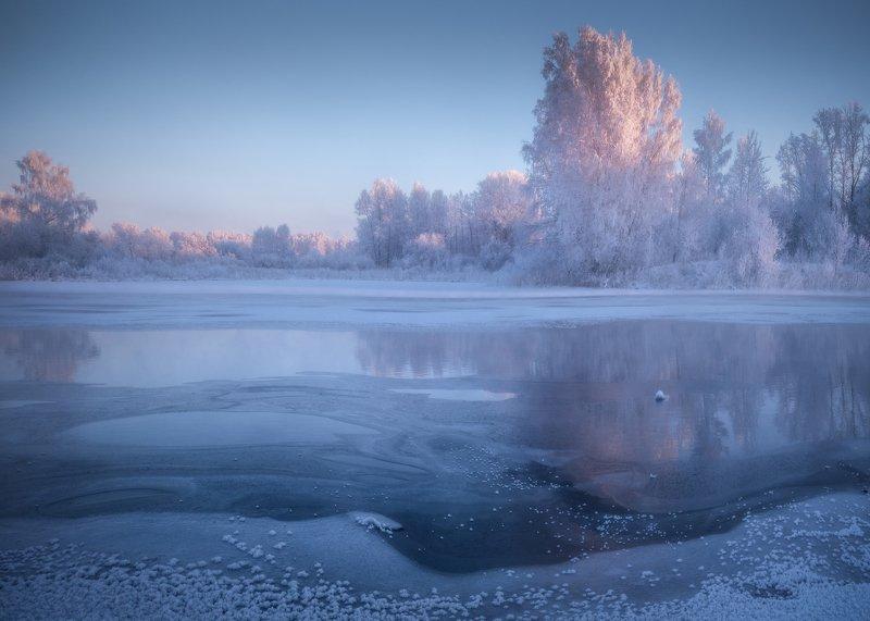 алтайский край, советский район, озеро светлое, лебединый заказник, морозное утро, зимнее утро, зимний пейзаж, декабрь, березы в инее, иней, березы Сиреневое утроphoto preview
