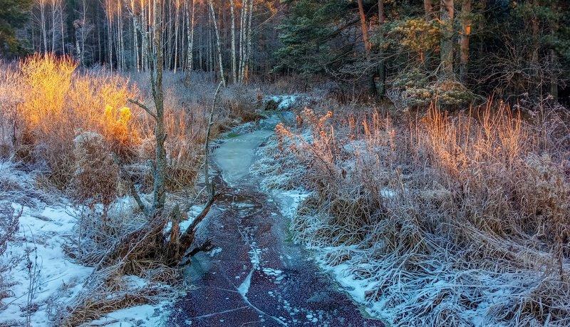 декабрь, иней, межсезонье, ручей заросли Заросшая, замершая, но есть светлые моментыphoto preview