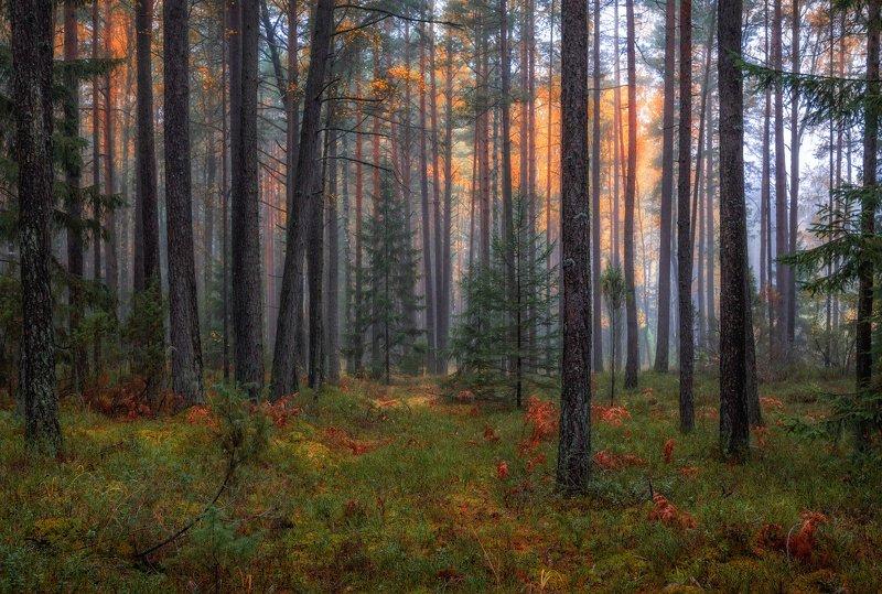 осень, лес, туман, Краски ненастного дняphoto preview