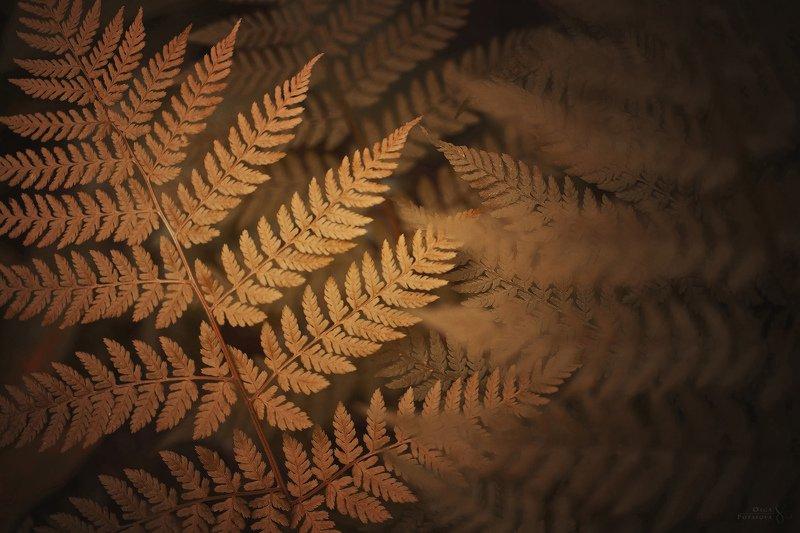 папоротник, макро, текстуры, золотой, осень Золотой папоротникphoto preview