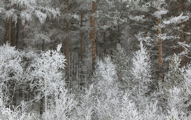 Зимний лес иней куржак  in regnum fantasiamphoto preview