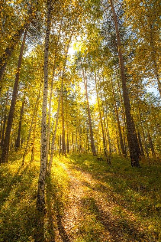 осень лес солнце листва свет Золотой лесphoto preview