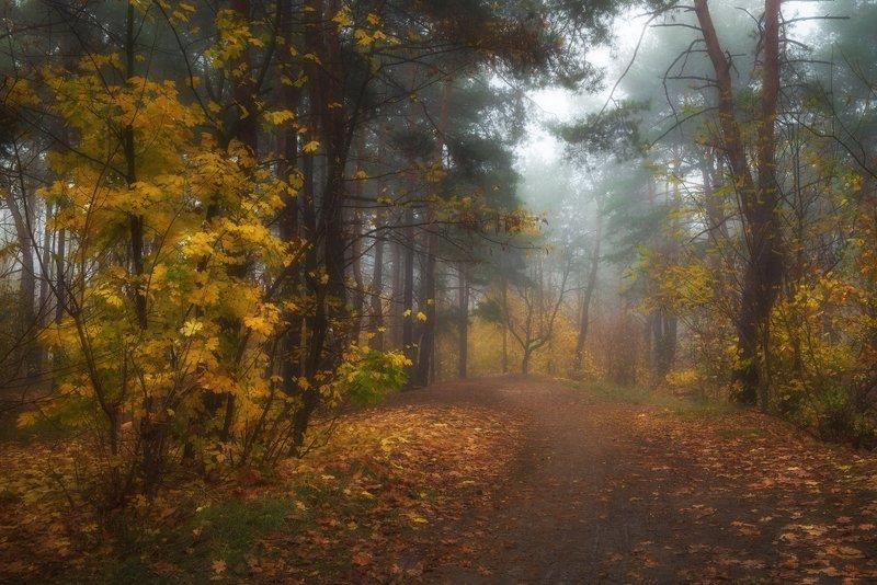 лес, осень, октябрь, утро, , туман Осенняя сыростьphoto preview