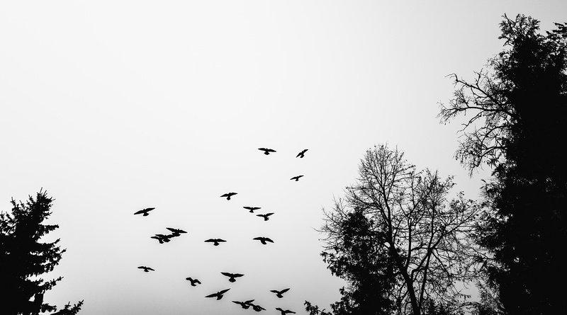 Птицыphoto preview