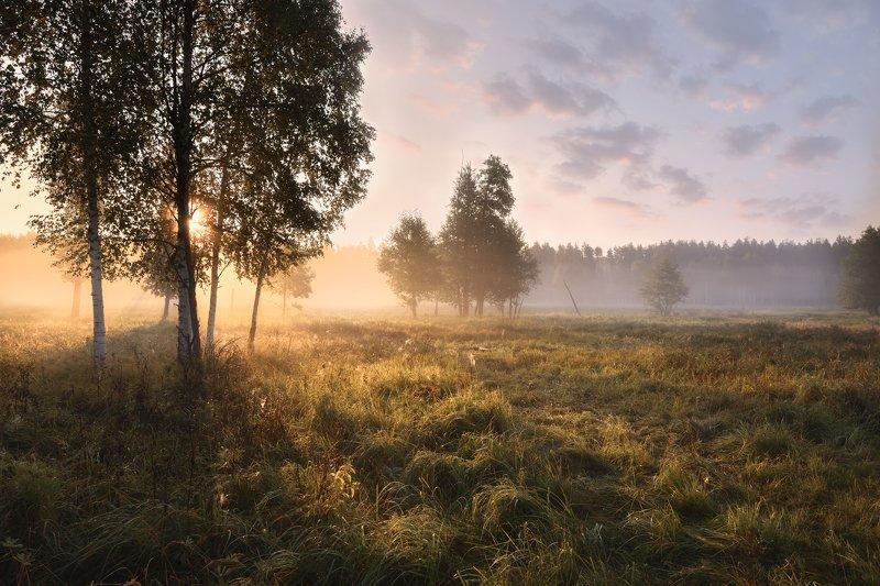 утро,рассвет,туман,лес,свет,солнце утроphoto preview