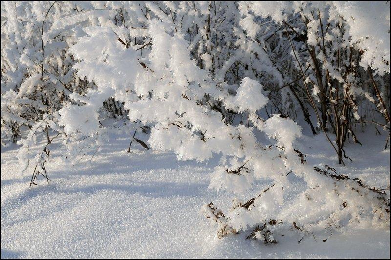 Зимняя нежностьphoto preview