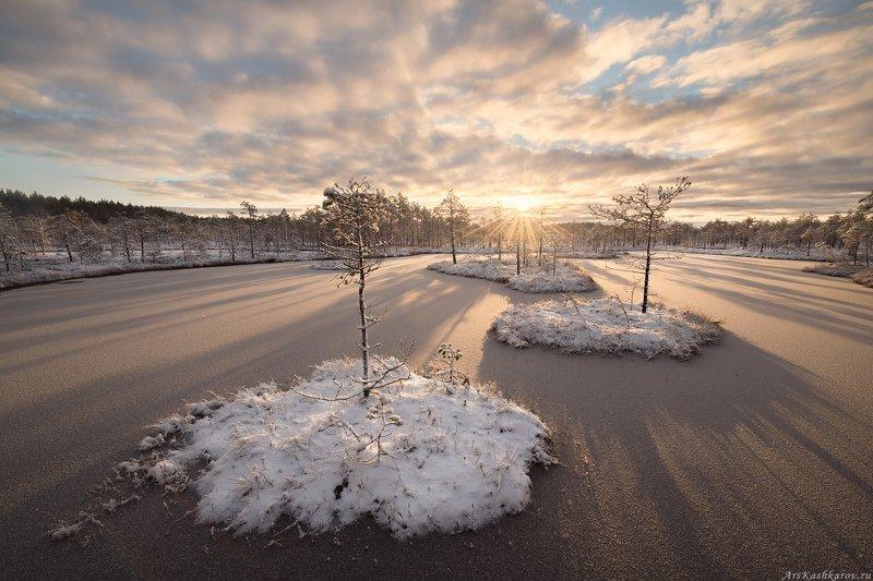 болото, ленобласть, фототур, зимний пейзаж, ленинградская область, первый снег \