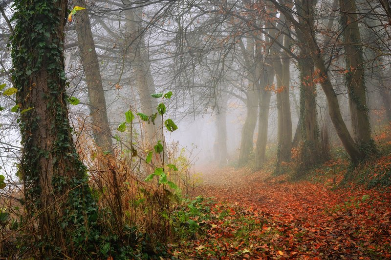 осеннее утро в переулке mist morning path magic road dranikowski autumn trees foggy ivy nature Осеннее утро в переулкеphoto preview