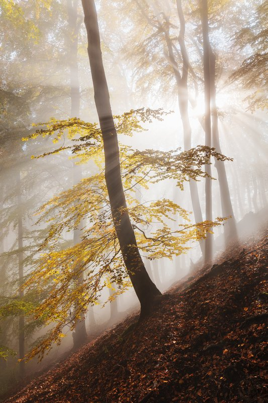 mist, fog, forest, sun, trees, autumn, fall, czech republic Here Comes the Sunphoto preview