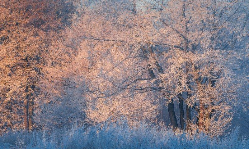 зима, пейзаж, утро, мороз, пехорка Очарование зимыphoto preview