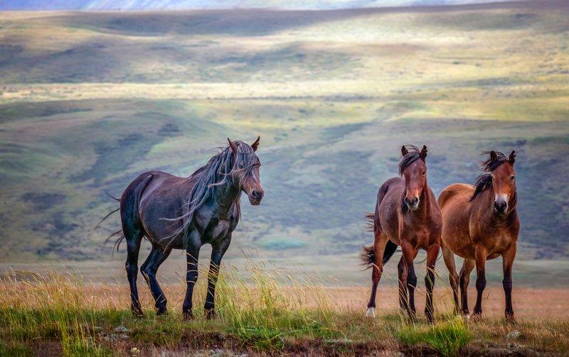 горный алтай,лето,лошади Вольный  ветер...photo preview