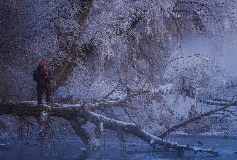 зима, река, мороз, иней \