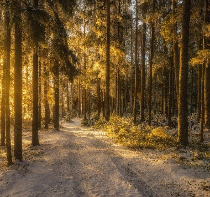 Лес в свете зимнего солнца.photo preview