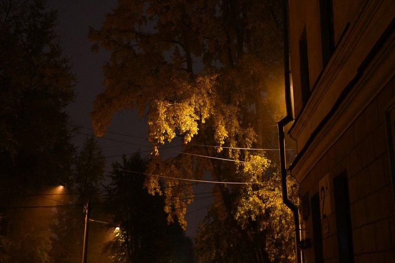 северодвинск, осень, ночь, Жёлтые листьяphoto preview