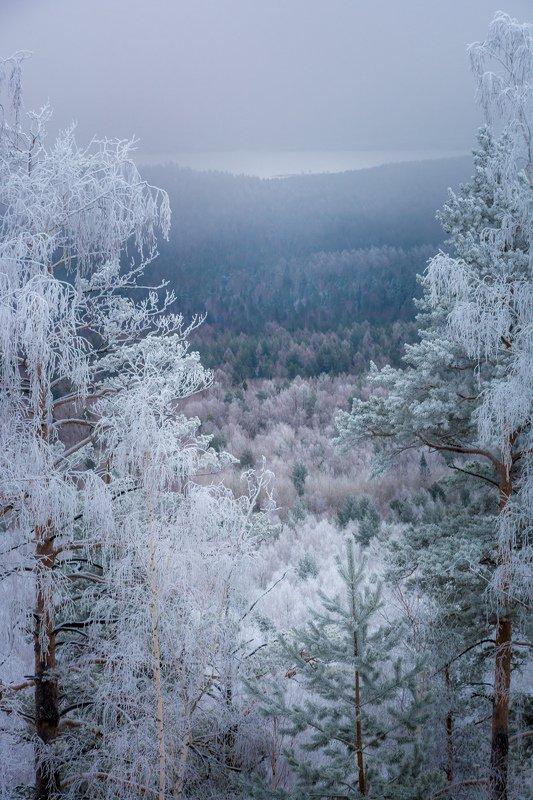 лес зима иней туман Серебрёный лесphoto preview