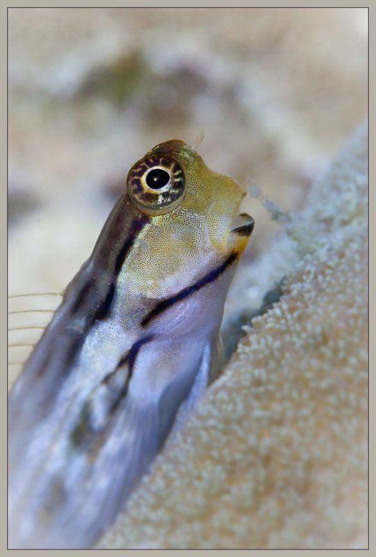 О рыбкахphoto preview