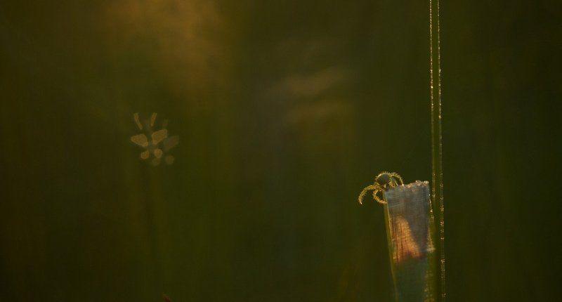 По ночам, во сне, к пауку приходят души загубленных им мотыльковphoto preview
