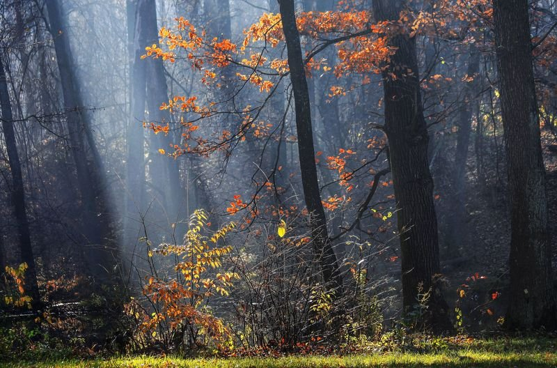 Осенняя икебана фото превью