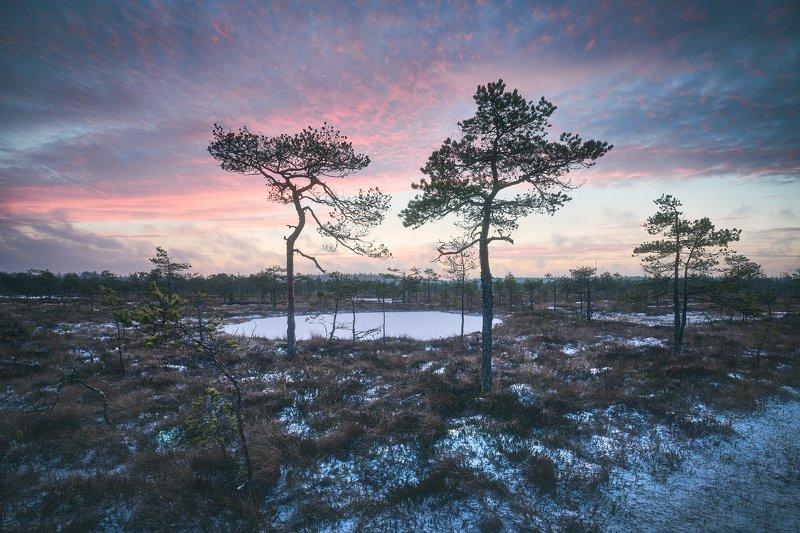Бонсай северных болотphoto preview