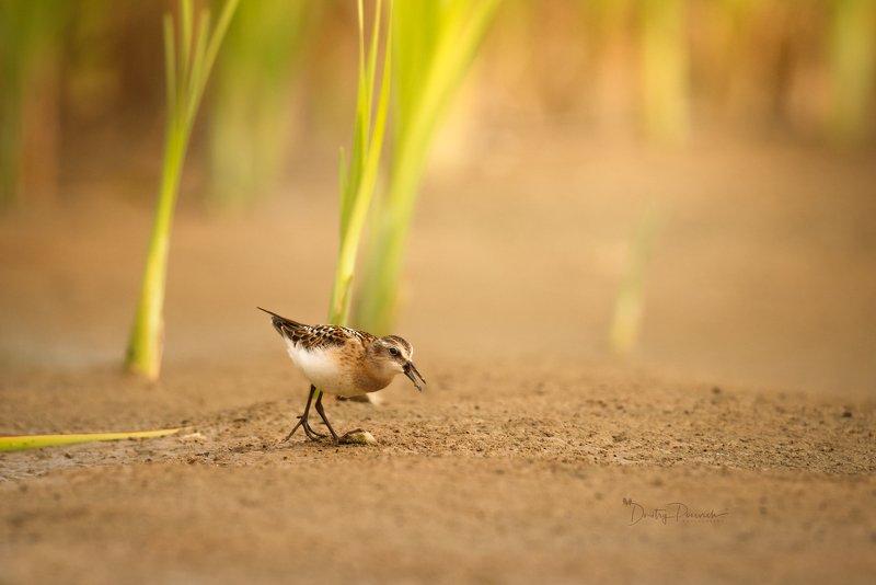 природа, лес, поля, огороды, животные, птицы, макро Утро на болотеphoto preview