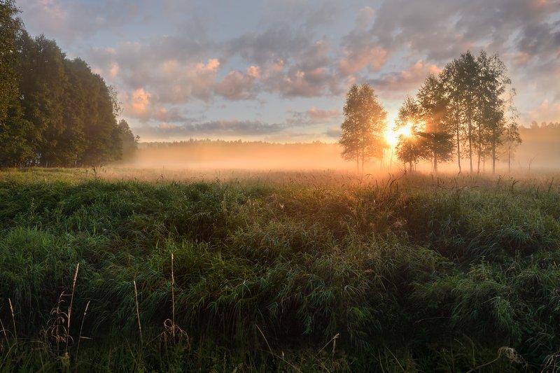 утро,рассвет,туман,лес,свет,солнце,небо,облака рассветphoto preview