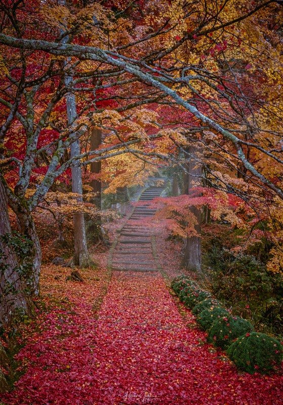 autumn kyoto japan  Autumn in Japanphoto preview