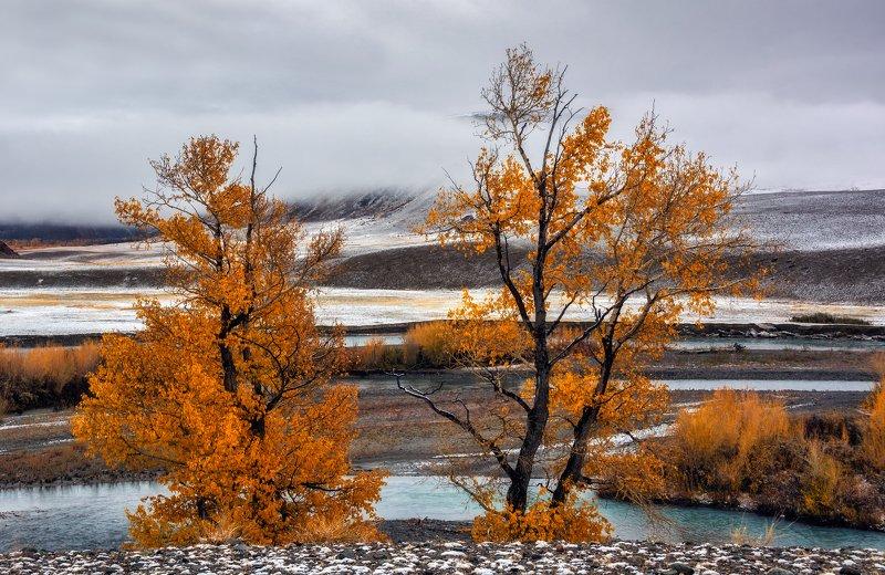 горный алтай,осень,река чаган-узун,тополиная роща,туман Два тополя...photo preview