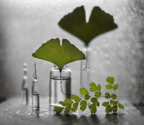 зелёная*