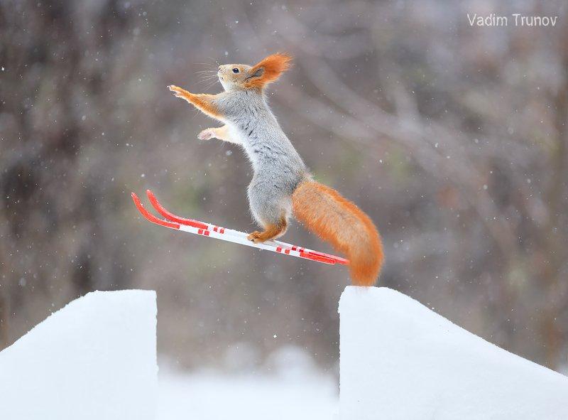 белка, лыжник, squirrel, freestyle Лыжник свободного стиляphoto preview