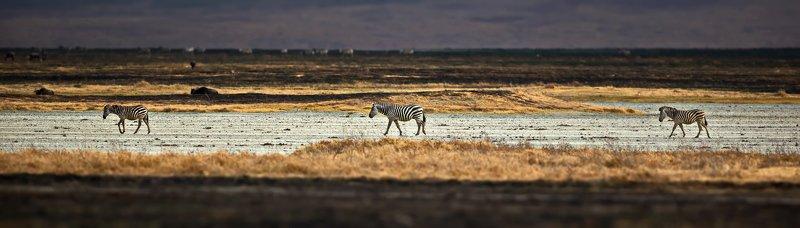 Африканский микс - 2photo preview