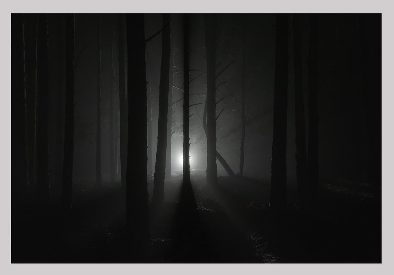mystical forestphoto preview