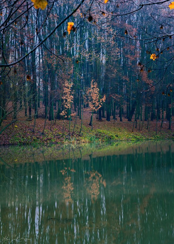 landscape, nature, winter, scenery, photography, silence, alone photo preview