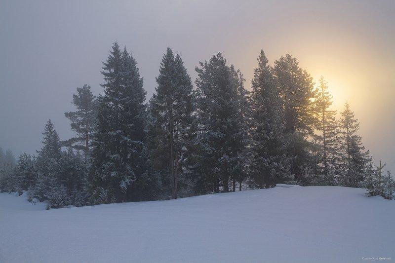 туман, зима, утро, рассвет, лес Туманное морозное утроphoto preview