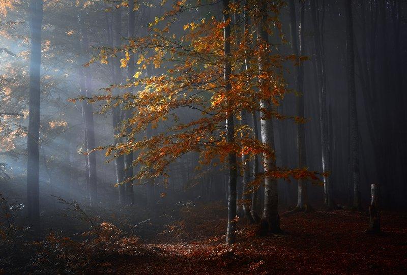 Утренний свет в лесуphoto preview