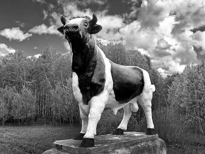 Двадцать первый год Быка Ковид поднимем на рога!photo preview