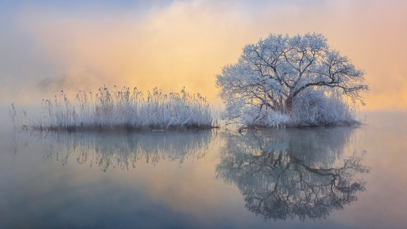 clouds,snow,fog,winter,nature,river,water,frost,frozen,cold,tree Ice treephoto preview