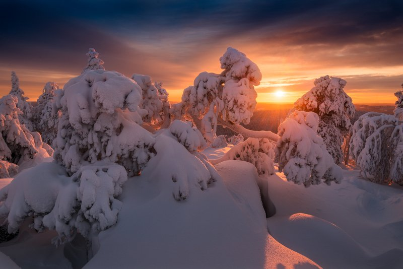 ёлки, закат, зима, снег, солнце В стране снежных чудищphoto preview