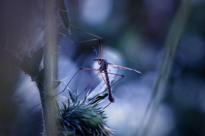 macro, nature, природа, nikon, жизнь, жить, macrophotography, жизнь насекомых, чувствовать, сопричастность \'В тишине ночного леса\'photo preview