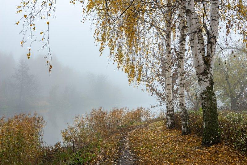 река, березы, осень, ноябрь, туман, усмань photo preview