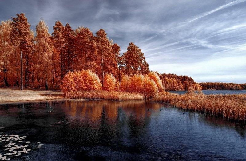 infrared,ик-фото,инфракрасное фото, инфракрасная фотография, пейзаж, осень В тихой осени.photo preview