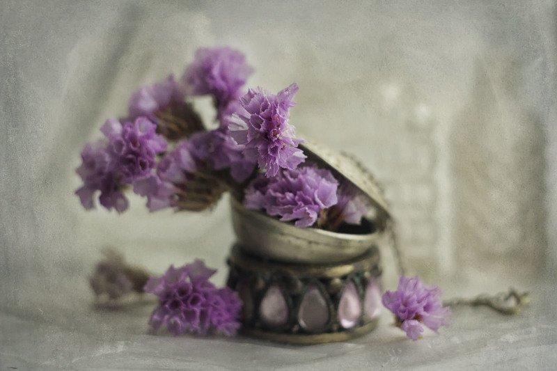 сухие цветы, сиреневые, крупный план ********photo preview