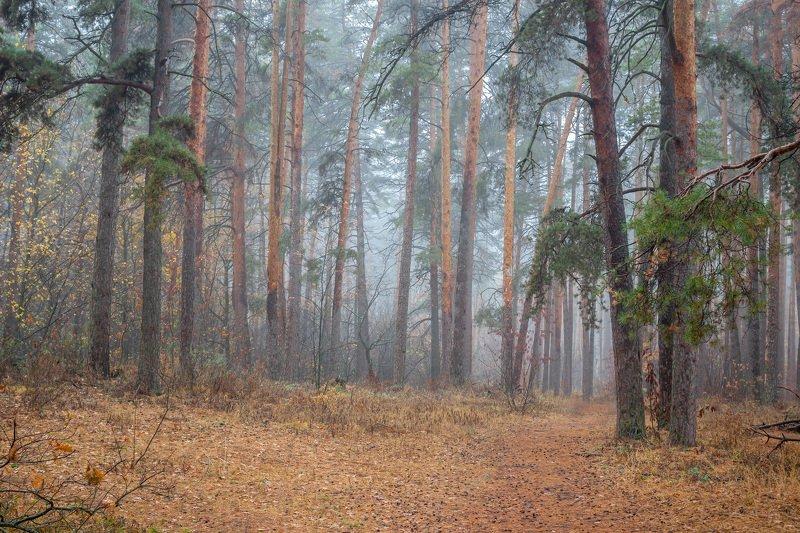 сосны, природа, осень, октябрь, лес, заповедник photo preview