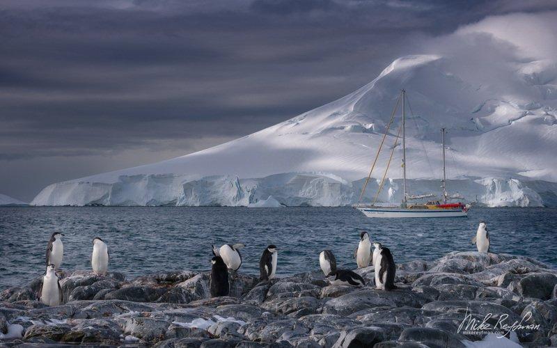 dramatic, polar climate, antarctic, antarctica, cold, romantic, extreme, gentoo penguin, chinstrap penguin Рождество в Антарктикеphoto preview