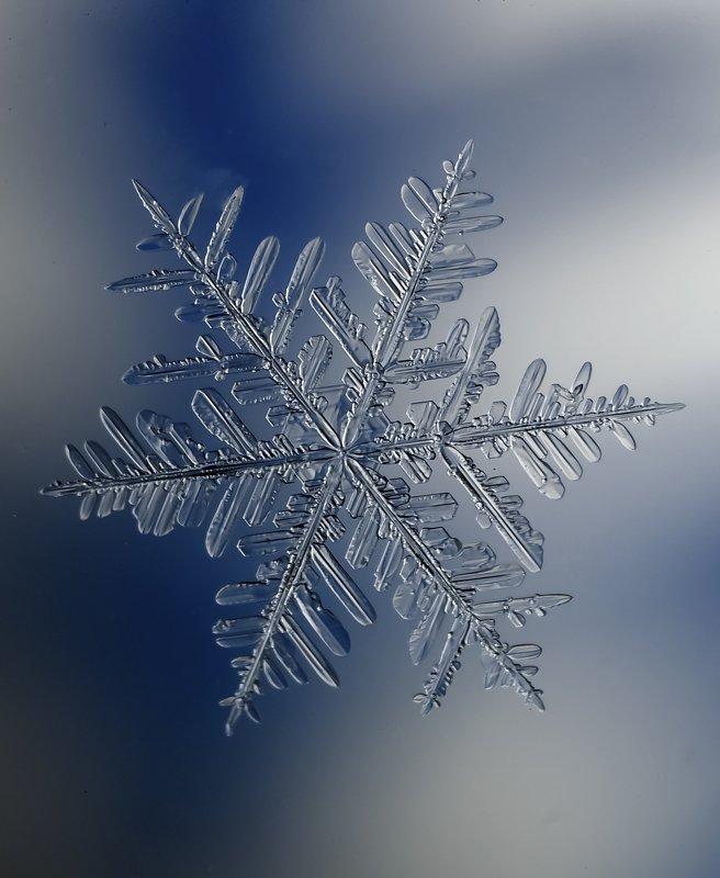 snowflake , снежинка, макро , macro , мороз ,снег photo preview