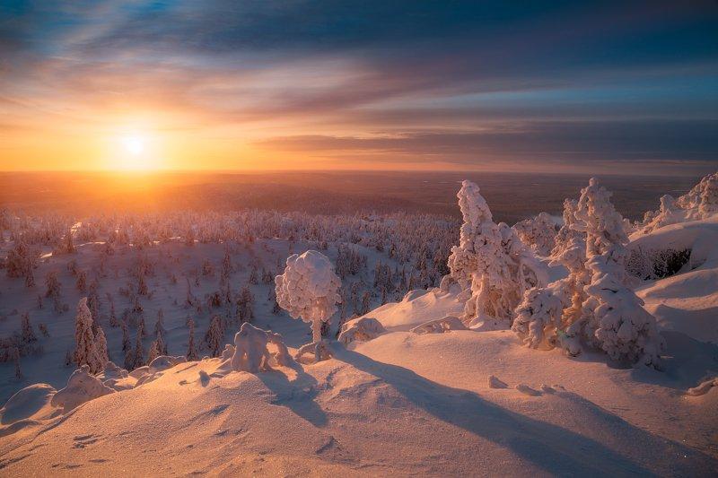 снег, зима, вечер, закат, ёлки, финляндия Снежный зефир и уходящее солнцеphoto preview
