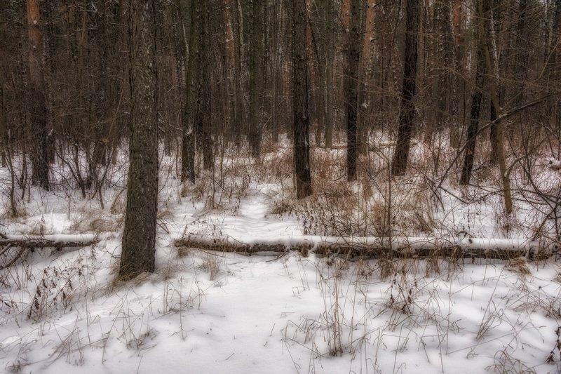 В Москву пришла зимаphoto preview