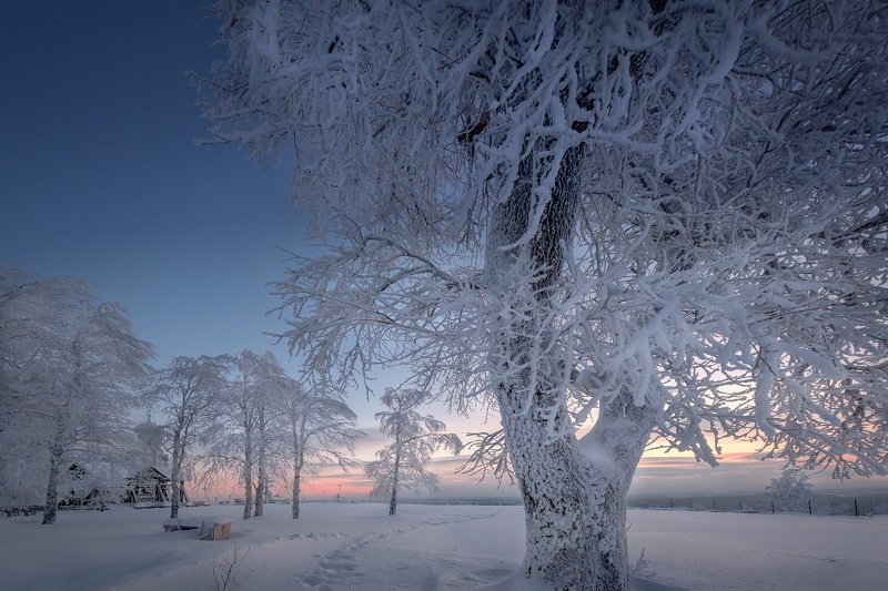 деревья, зима, рождество, ночь, холод, мороз, монастырь, белая, гора Сахарные деревьяphoto preview