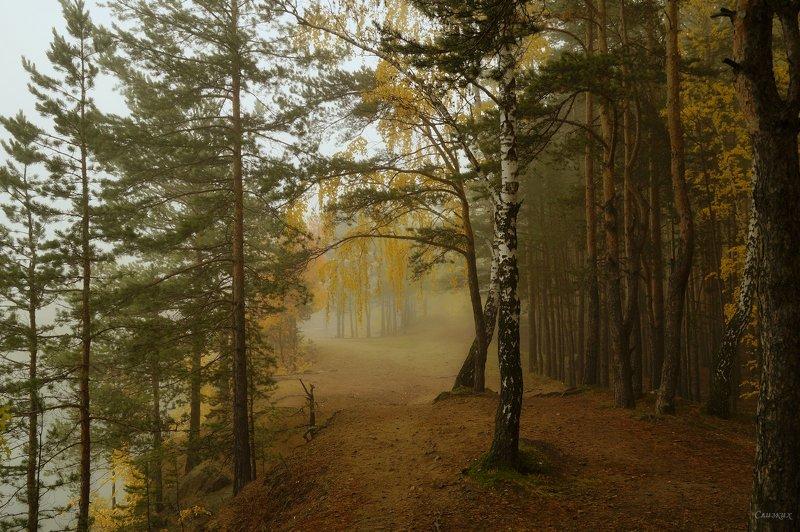 пейзаж,туман,октябрь,лес Утро в лесуphoto preview