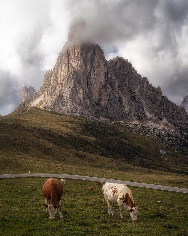 apls , dolomites, italy ,mountain ,cows, giau ,rocks,veneto ,light Альпийские лугаphoto preview