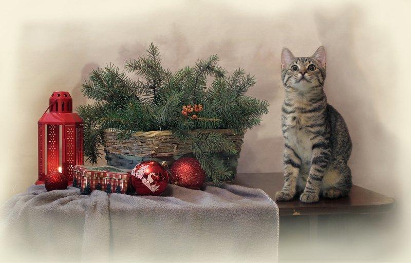 композиция. животные, кошки, новый год, елка, елочные шары И что - правда скоро Новый год?photo preview